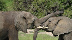 4 MP Tanzania_Udzungwa_Elephant_DSC06271